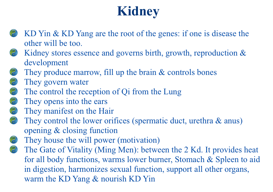 The Functions Of The Zang Organs In Tcm Acupro Academy