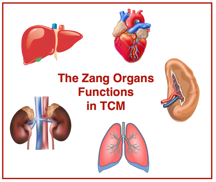 go diagnosis chinese medicine get zang fu liver gallbladder patterns tcm