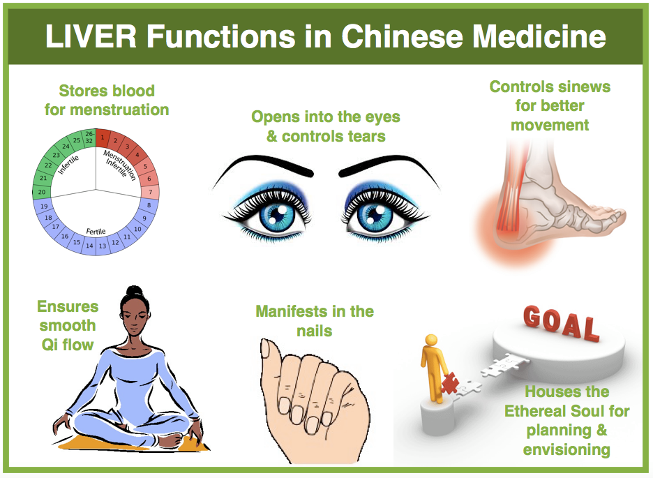 All About The Tcm Liver Acupro Academy