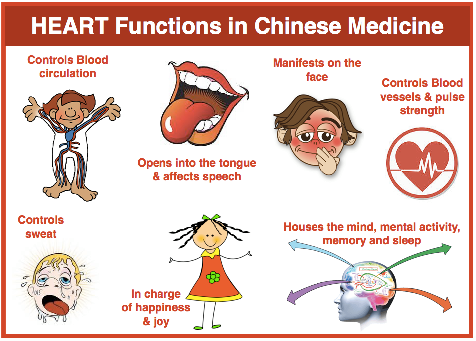 fire chinese medicine relationship to spleen