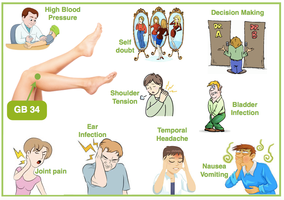 All About the TCM Gallbladder   AcuPro Academy