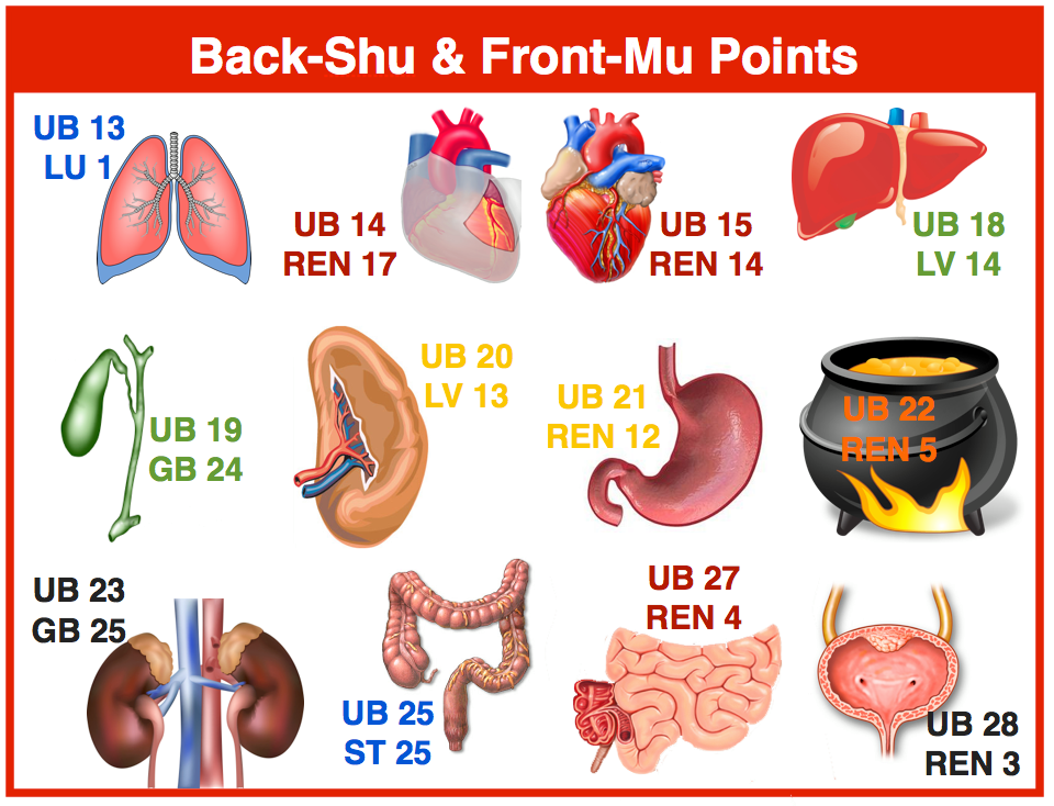 Back Shu Acupuncture points