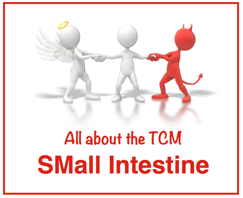 All About The TCM Small Intestine | AcuPro Academy