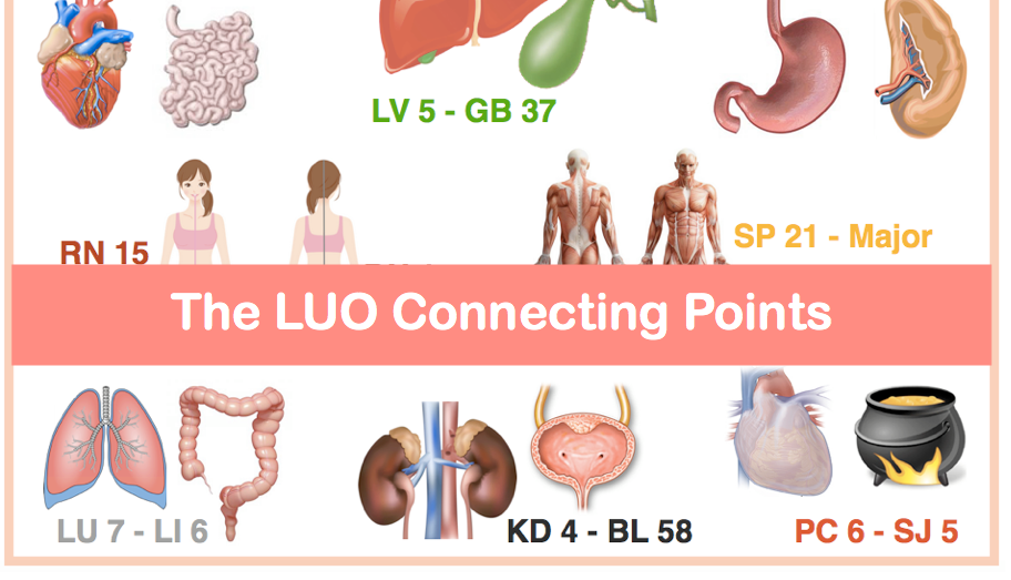 All About the LUO Connecting points | AcuPro Academy | Acupuncture